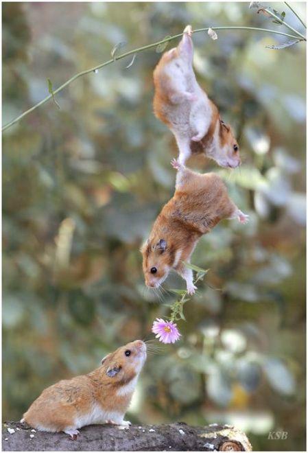 Squirrels andFlower