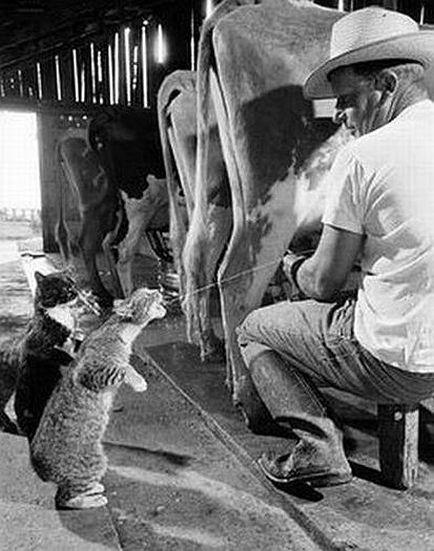 lol-cat-milk-squirt enlarged