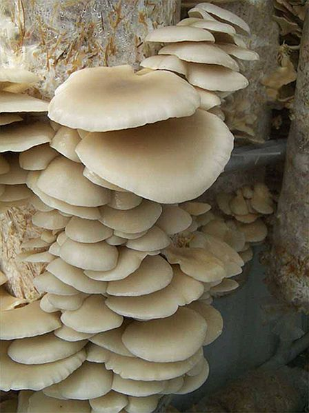 mushroom_growing_system the Farmery enlarged